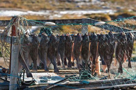 Fisch Trocknung vor dem Fenster