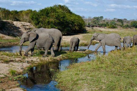 Elefanten Herde beim überqueren des Sabi Sand River