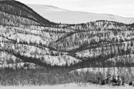 Norwegische Winter- Waldlandschaft im Hohen-Norden